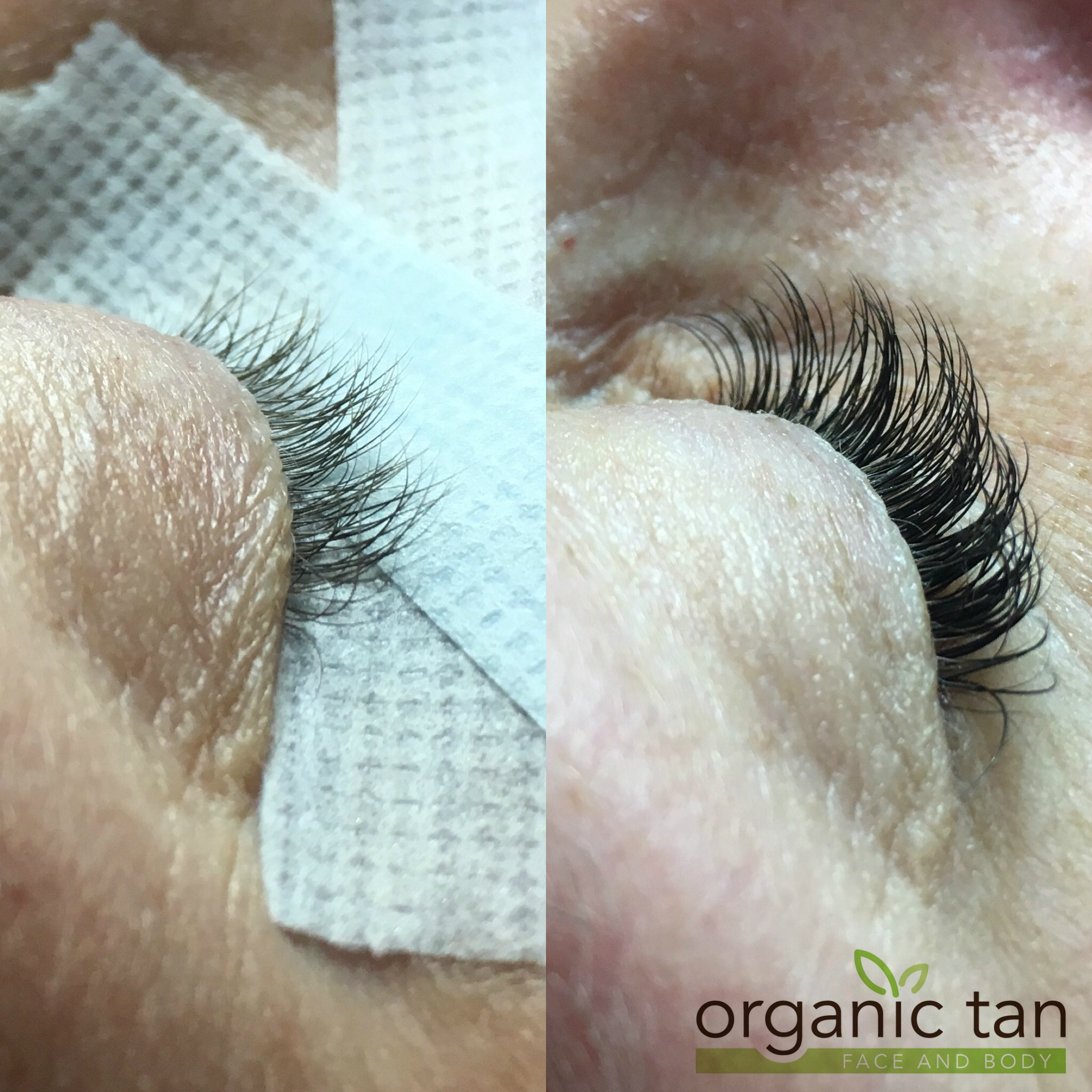 Eyelash Tinting Alongside Eyelash Extensions Organic Tan